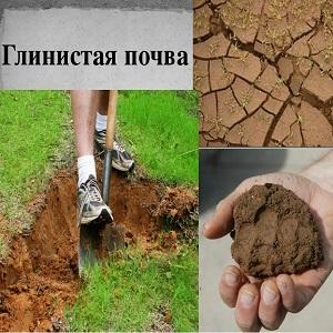 Как сделать дренаж на глинистых почвах 606